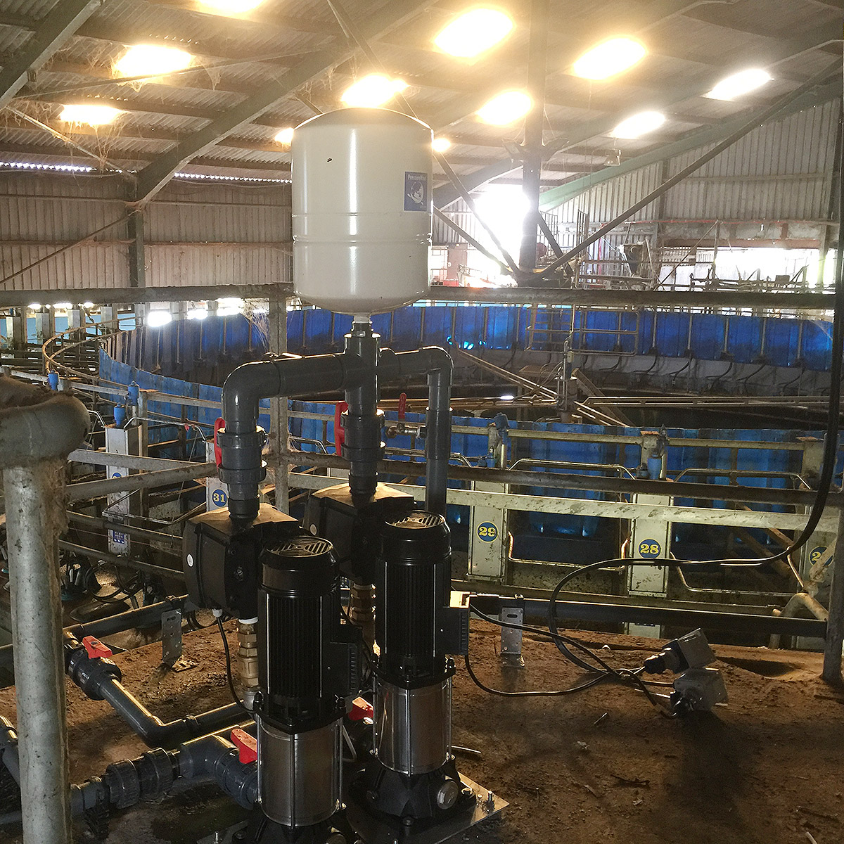 Booster pumps in milking parlour