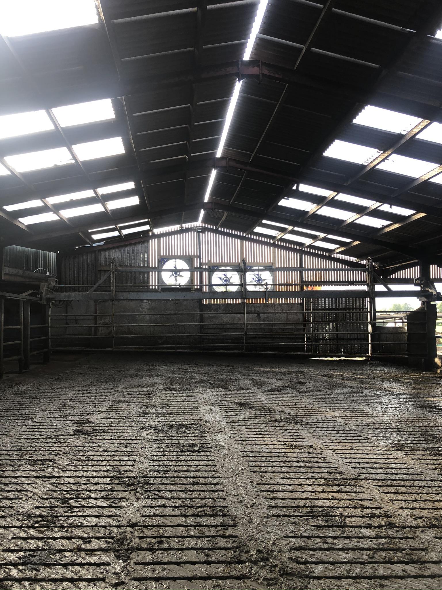 Cow shed ventiliation